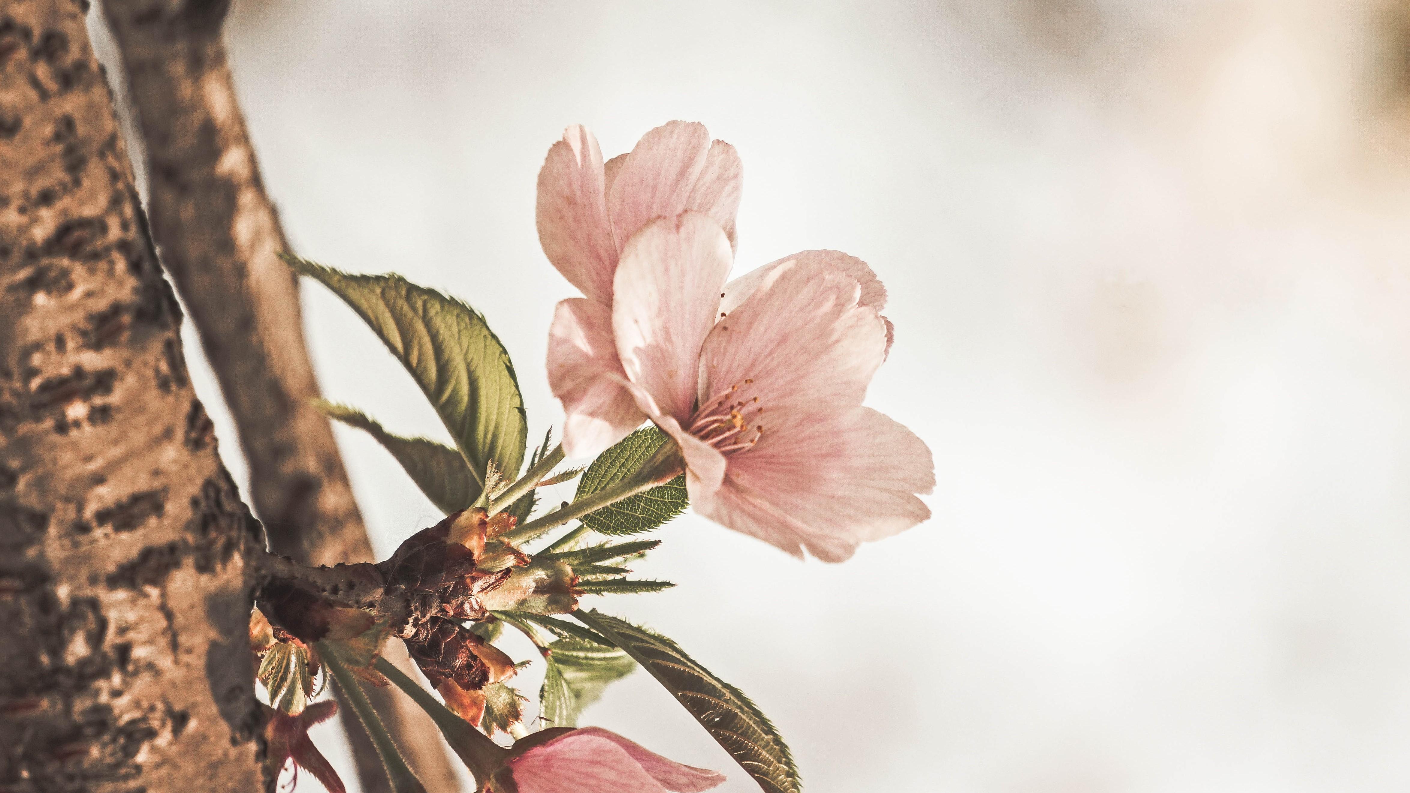 Przemiana Drzewa – Wiosna – kwaśny smak początku