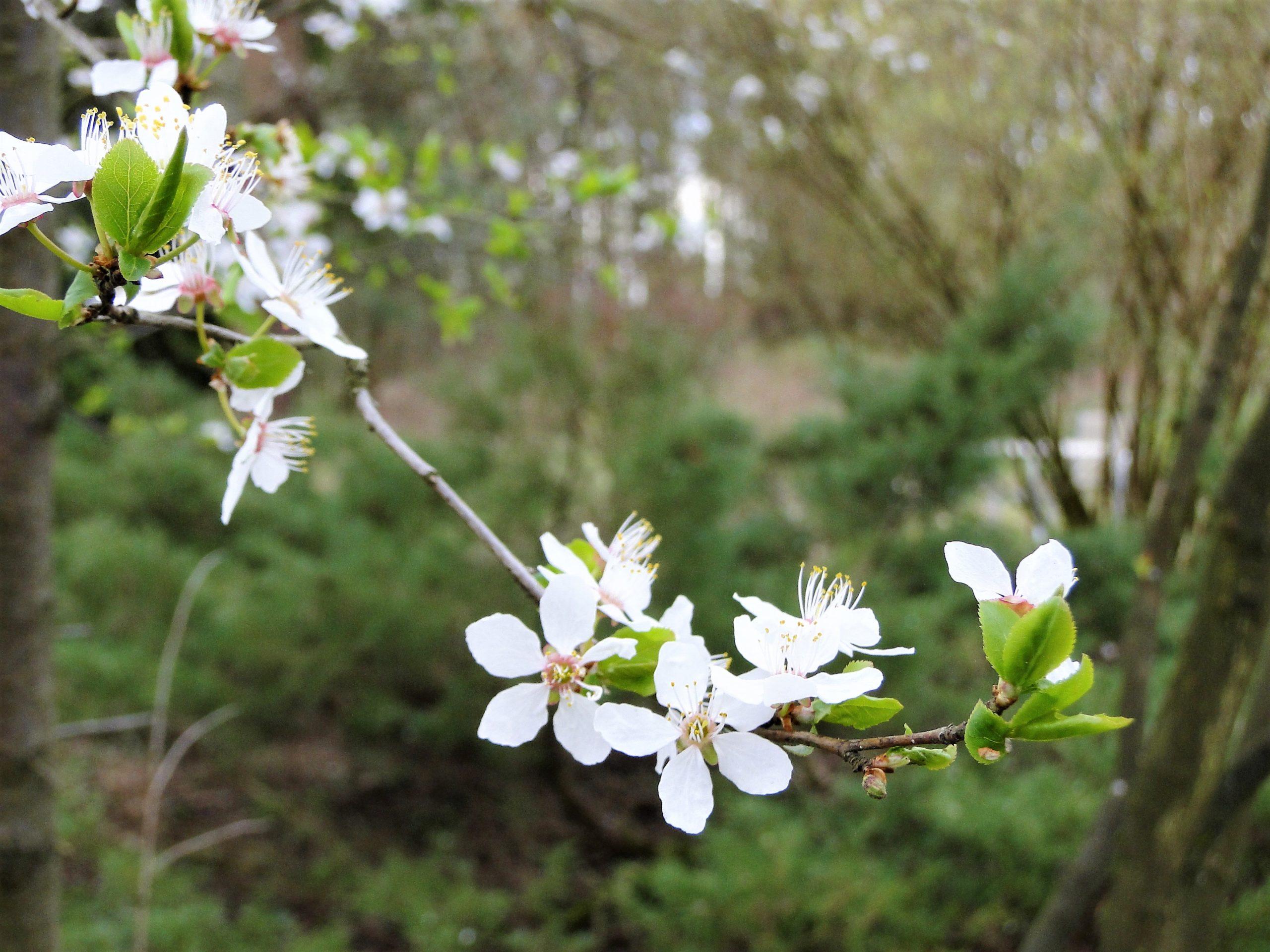Wiosna – czas dla wątroby